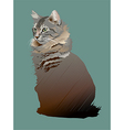 Young Maine Coon cat vector image