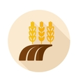 Ears of Wheat Barley or Rye on Field flat icon vector image