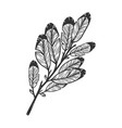 feather leaves tree branch sketch vector image vector image