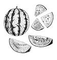 hand drawn set of watermelon sketch vector image
