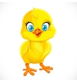 Cute yellow cartoon baby chicken vector image vector image