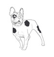 french bulldog hand drawn sketch isolated on vector image
