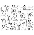 kitty cats vector image vector image