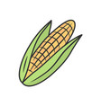 corn color icon vector image