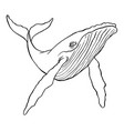 humpback whale vector image vector image
