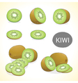 Set of kiwi fruit in various styles vector image