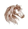 Wild brown horse head sketch vector image vector image