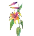 Beautiful color lily vector image vector image