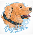 dog cute golden artwork vector image vector image
