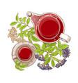 elderberry tea vector image