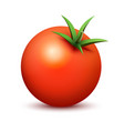 fresh tomato on white background - tasty in vector image