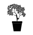 plant with bills dollars vector image