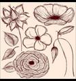 hand drawn vintage flowers set on brown background vector image