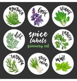 Spices herbs labels Colored greenery set vector image