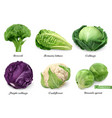 cabbages and lettuce leaf vegetables realistic vector image