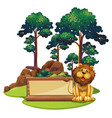 sign template with wild lion in forest vector image vector image