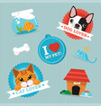 cat amp dog lover vector image