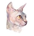 Hand drawn portrait Elegant Sphynx cat vector image
