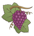 red grapes woodcut vector image vector image