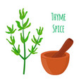 thyme spice mortar pestle cartoon style vector image vector image