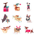 funny dogs with christmas symbols set xmas and vector image
