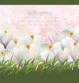 hello spring flowers card watercolor white vector image vector image