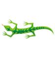 tribal lizard green vector image vector image