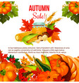autumn sale offer poster for thanksgiving holiday vector image vector image