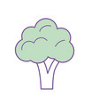 delicious and health broccoli vegetable vector image vector image