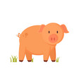 farm animal standing piglet cartoon vector image