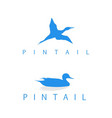 logo pintail silhouette vector image