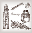 rosemary oil set vector image vector image