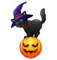 black cat standing on a pumpkin vector image vector image