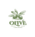 green olives and organic oil symbols isolated on vector image