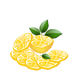 Half and Sliced of Lemon on White Background vector image vector image