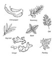 hand drawn spice and vegetable collection vector image vector image