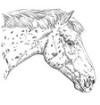 horse portrait-2 vector image vector image