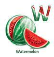 alphabet letter w watermelon vector image