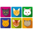 Cat portraits collection vector image vector image