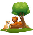 liones cute of males and females sit in the forest vector image