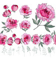 set with different peonies on white herbs plants vector image vector image