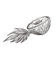 coconut cut in half with leaf hand drawn sketch vector image vector image
