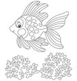 gold fish with a good-humored smile vector image vector image