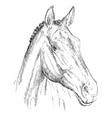 horse portrait-7 vector image vector image