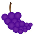 isolated grapes vector image