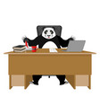 chinese boss panda sitting in an office vector image vector image