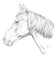 horse portrait-9 vector image vector image