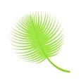 Palm leaf vector image vector image