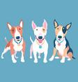set bull terier dog vector image vector image