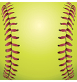closeup a softball vector image vector image
